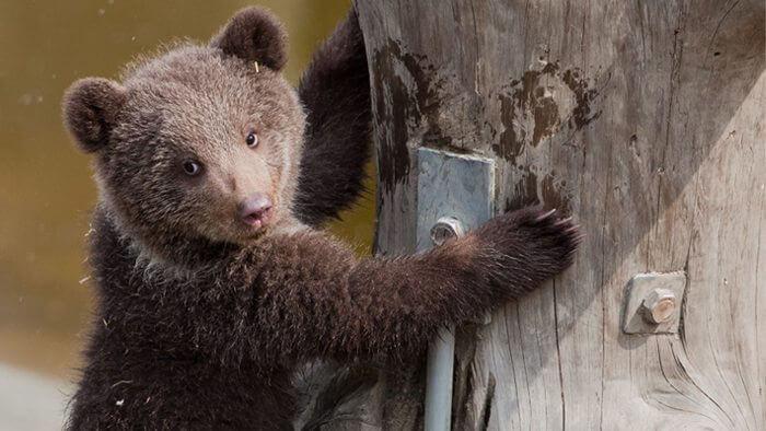 Bjørneparken på Flå