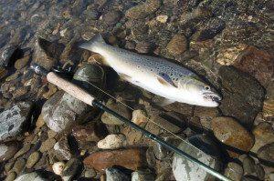 Fisking i Numedalslågen