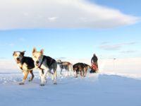 Dog sledding - hundekjøring med Geilo Husky